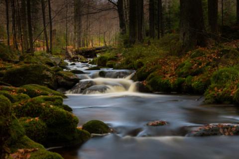 Kleine Ohe – Nationalpark Bayerischer Wald