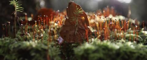 das Geheimnis des Waldes