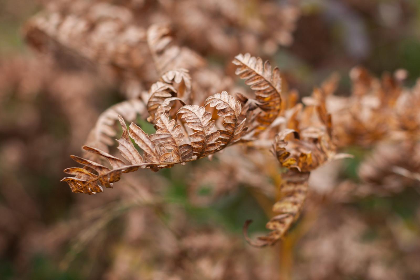 20141005-8630-Der Herbst ist da.jpg