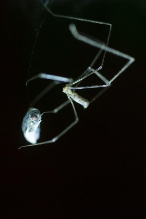 Spinne frisst Fliege