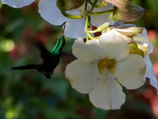 Kolibri72A8391