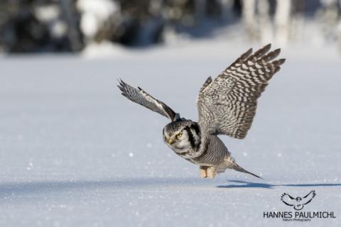 Mein Bild im BBC Wildlife Magazine!
