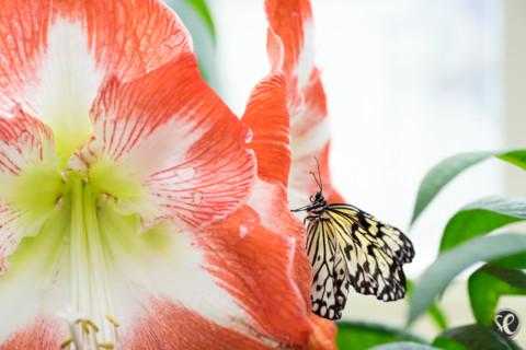 Schmetterlingsgefühle