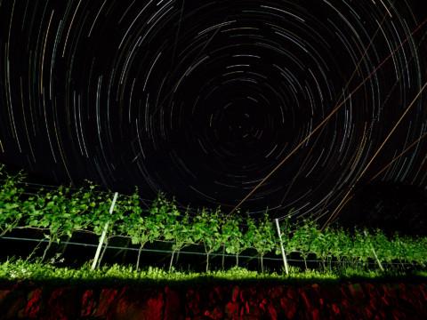 Nachts im Weinberg